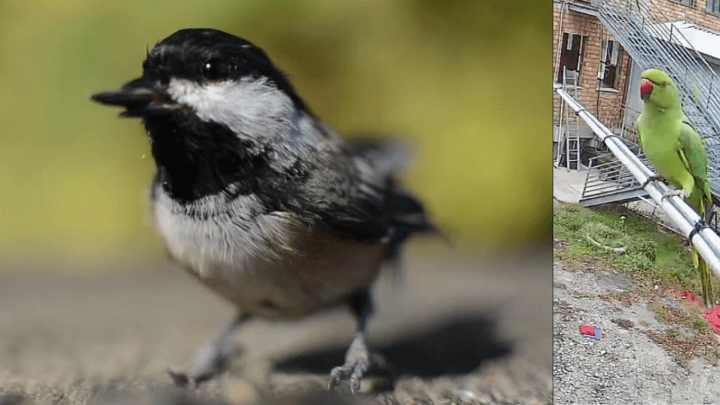 Uccellino e Pappagallo